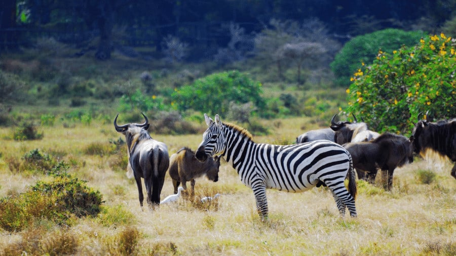 10 Best Wildlife Trail Cameras